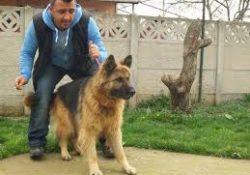 Ataşehir Köpek Pansiyonu