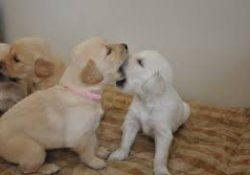 Köpek Pansiyonları
