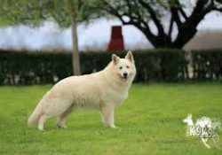 Bağcılar Köpek Pansiyonu