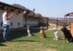 Yeniköy Köpek Pansiyonu