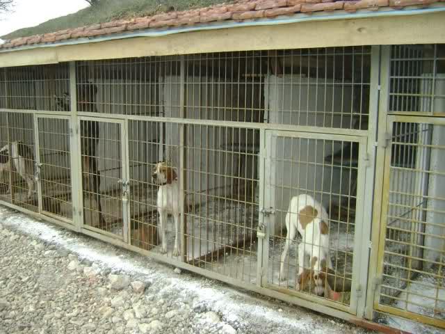 Şişhane Köpek Pansiyonu Fiyatı
