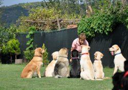 Sultangazi Köpek Oteli