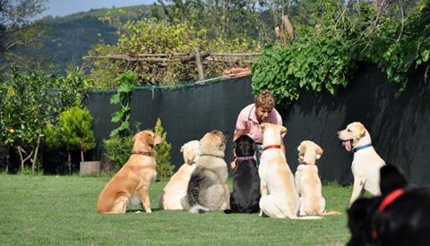 Satılık köpek Elazığ
