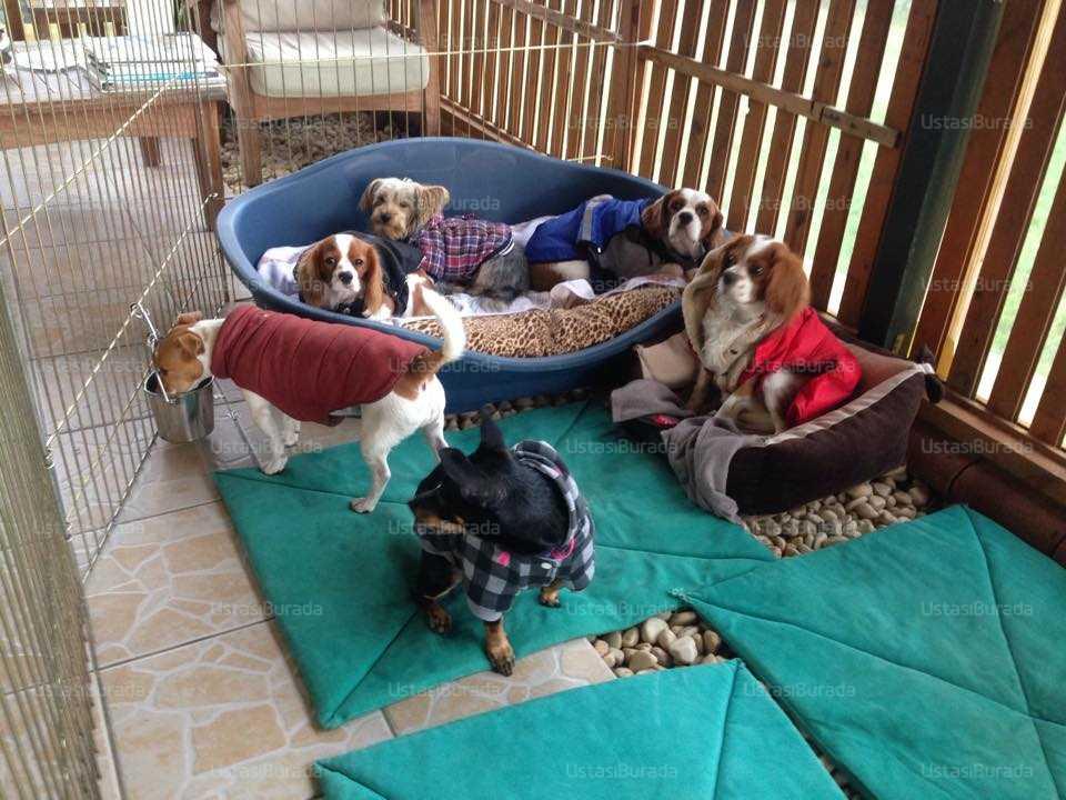 Köpek eğitimi av köpeği
