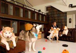 Teşvikiye Köpek Pansiyonu