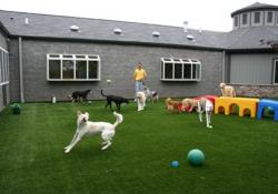 Yeşilköy Köpek Pansiyonu