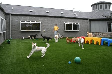 Mutlu Köpek Oteli