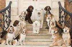 Sultangazi Köpek Pansiyonu