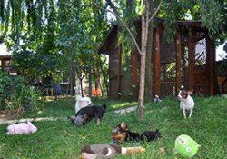 Bakırköy Köpek Pansiyonu