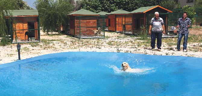 Köpek Pansiyonu Avrupa Yakası