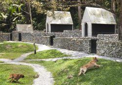 Zeytinburnu Köpek Pansiyonu