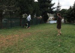Pendik Köpek Pansiyonu En İyisi