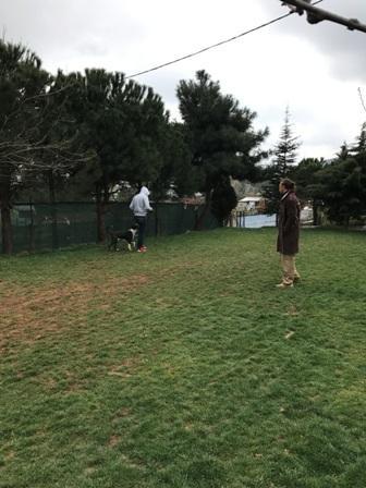 Istanbul Beylikdüzü Köpek Pansiyonu