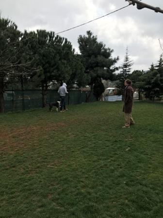 Tuzla Köpek Pansiyonu