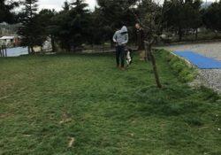Başakşehir Köpek Pansiyonu