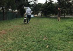 Ümraniye Köpek Pansiyonu