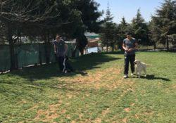 Köpek Oteli Bakırköy İstanbul