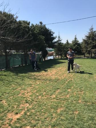 Satılık köpek Erzurum