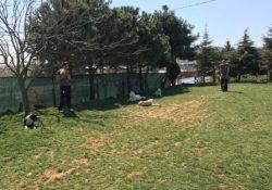 Ataşehir Köpek Oteli Bilgileri