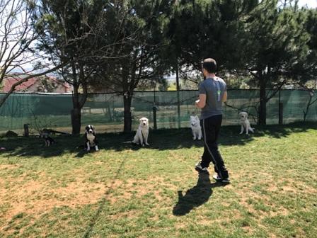 Köpek Eğitiminde En Iyi Adres