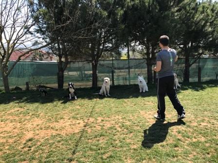 Köpek Pansiyonu Anadolu Yakası