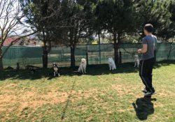 Şişli Köpek Pansiyonu İstanbul