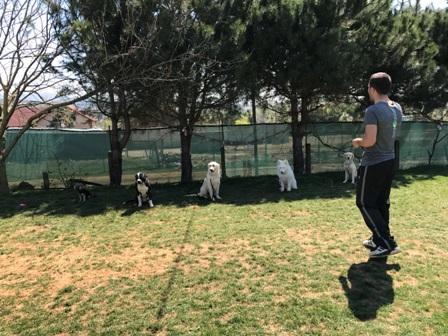 köpek eğitimi ekşi