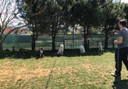 İstanbul Samandıra Köpek Pansiyonu