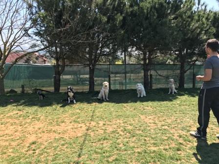 Istanbul Kozyatağı Köpek Pansiyonu
