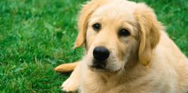 Köpek İlanları